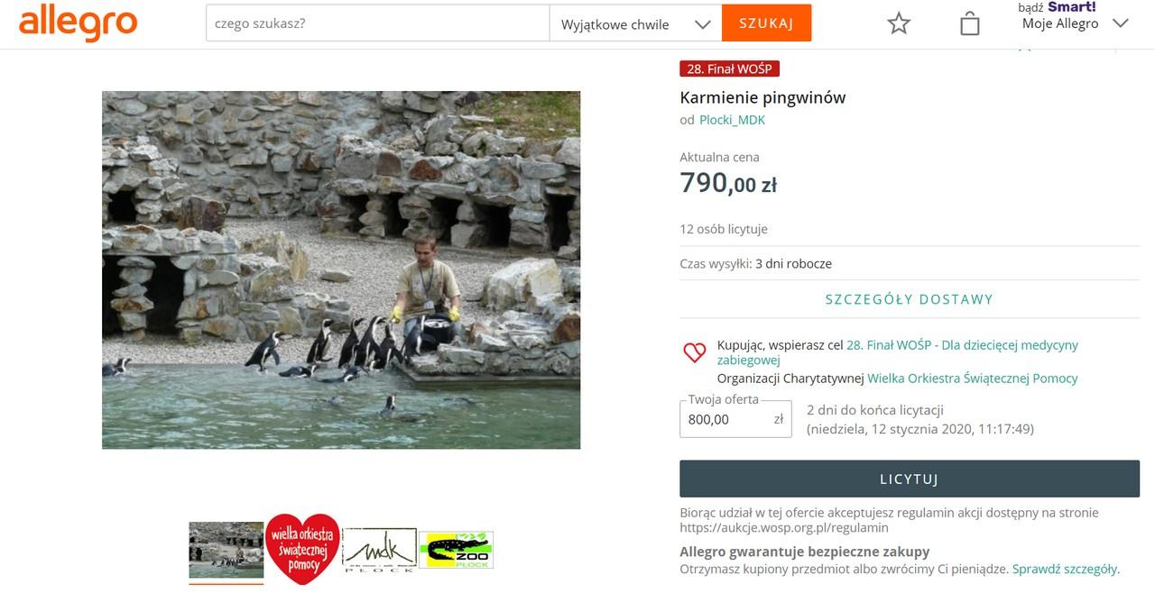 WOŚP karmienie pingwinów