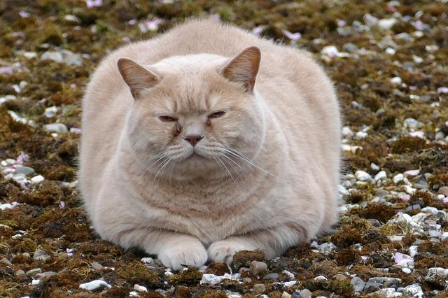 kot odpoczywa