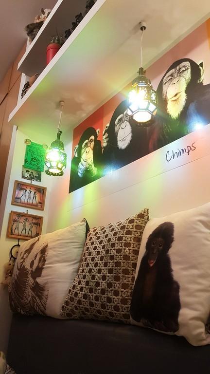 Małpy kolekcja. 3 obrazki z małpami powieszone na ścianie. Niżej, na kanapie poduszki z małpami.