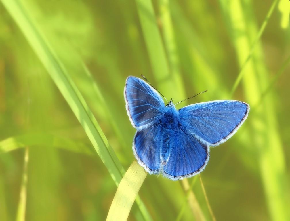 niebieski motyl - symbol osób Głuchych
